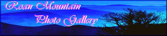 Roan Mountain Gallery